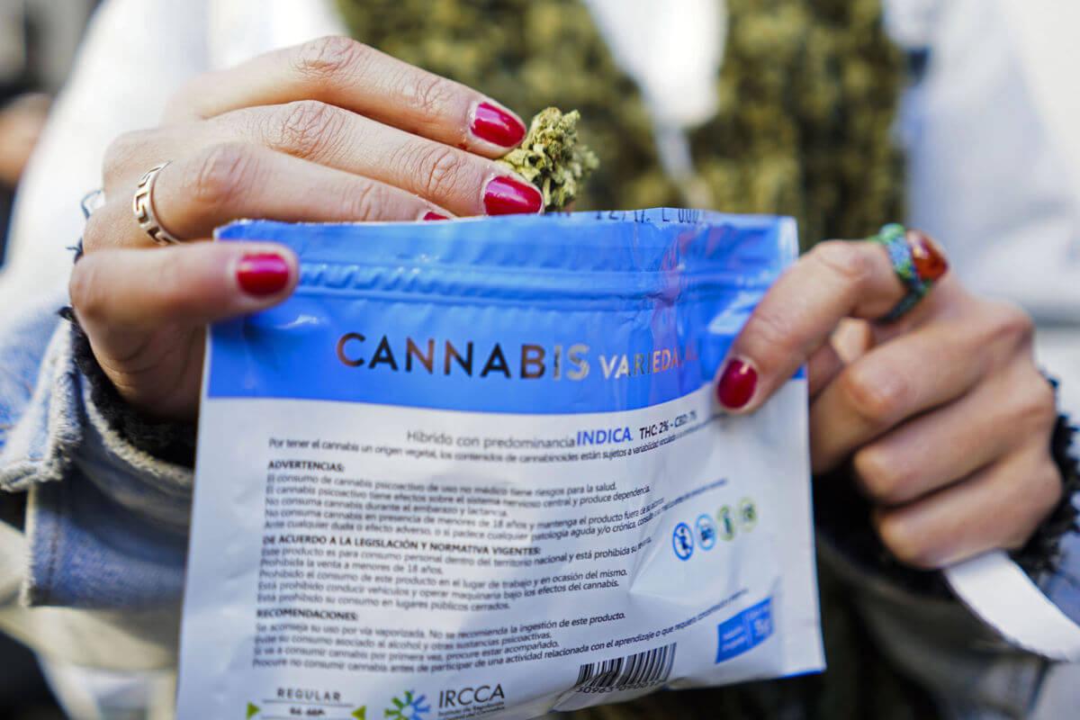 Uruguay necesita más marihuana: La demanda del weed legal es tan alta que ya no alcanza