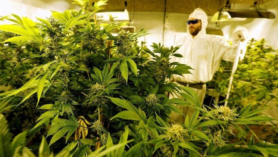 """El insólito estudio de científicos chilenos: el cannabis medicinal """"no sirve"""""""