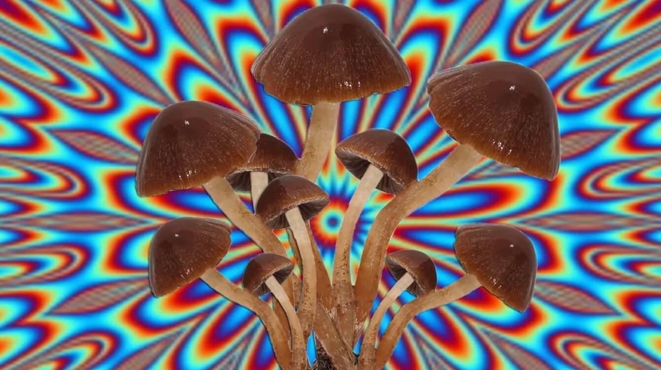 ¿Quieres dejar de fumar? Según un estudio, los hongos alucinógenos podrían ayudarte
