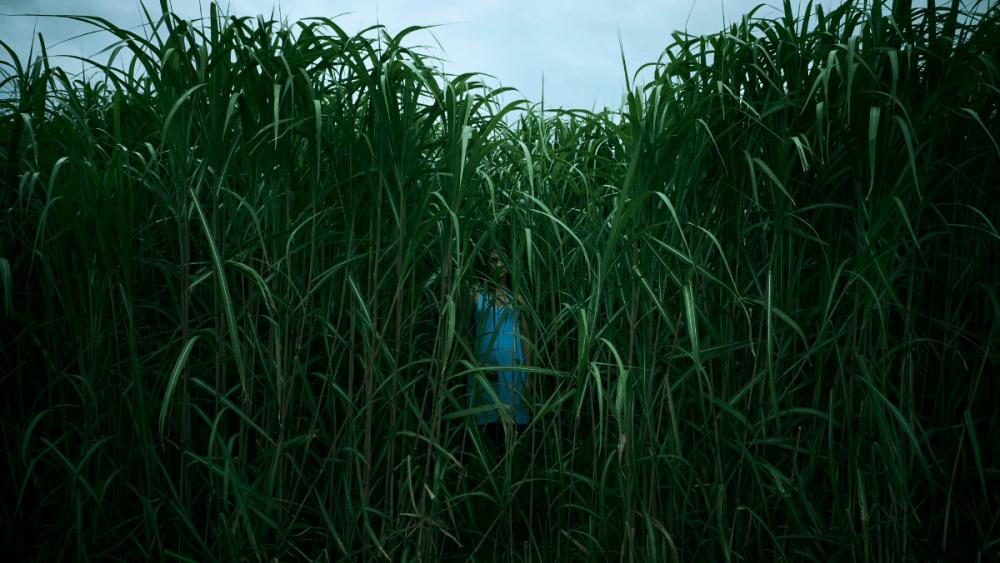 """""""In The Tall Grass"""": Netflix adapta a Stephen King en una nueva y aterradora película"""
