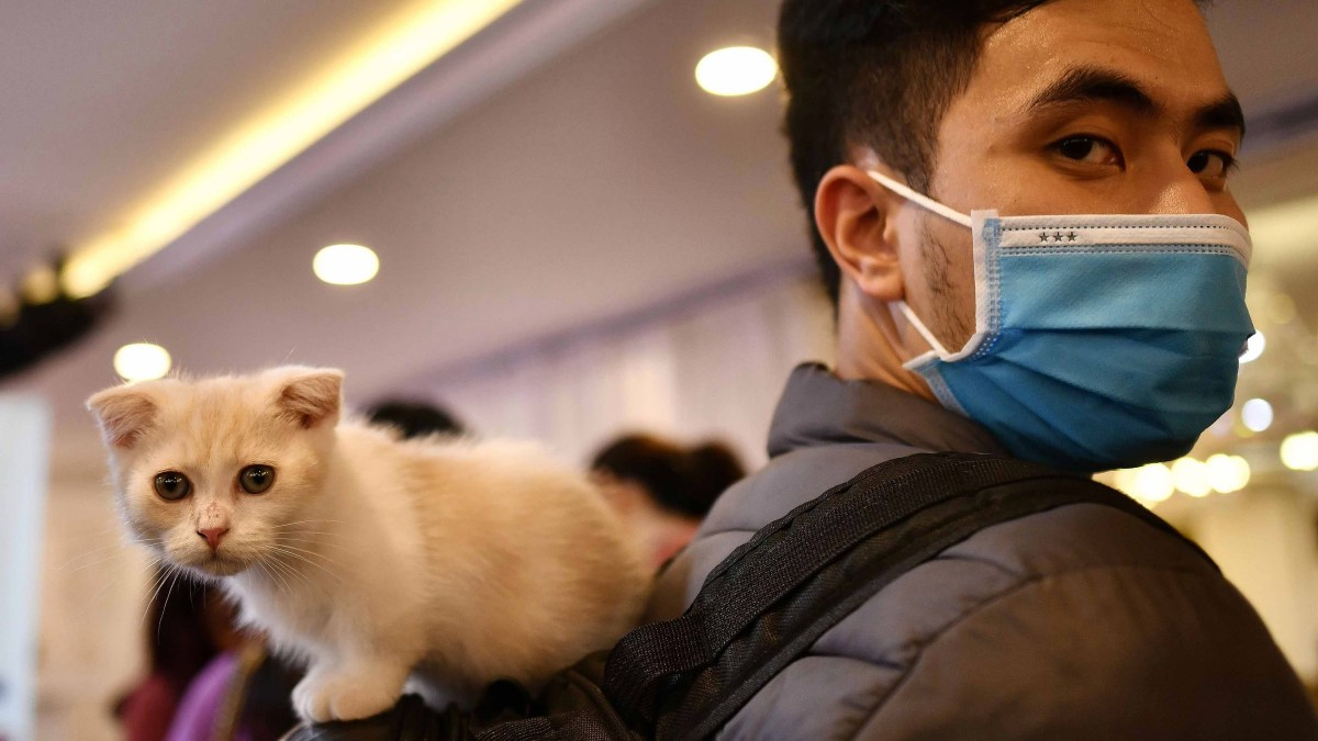 Estudio revela que gatos y hurones pueden contraer coronavirus
