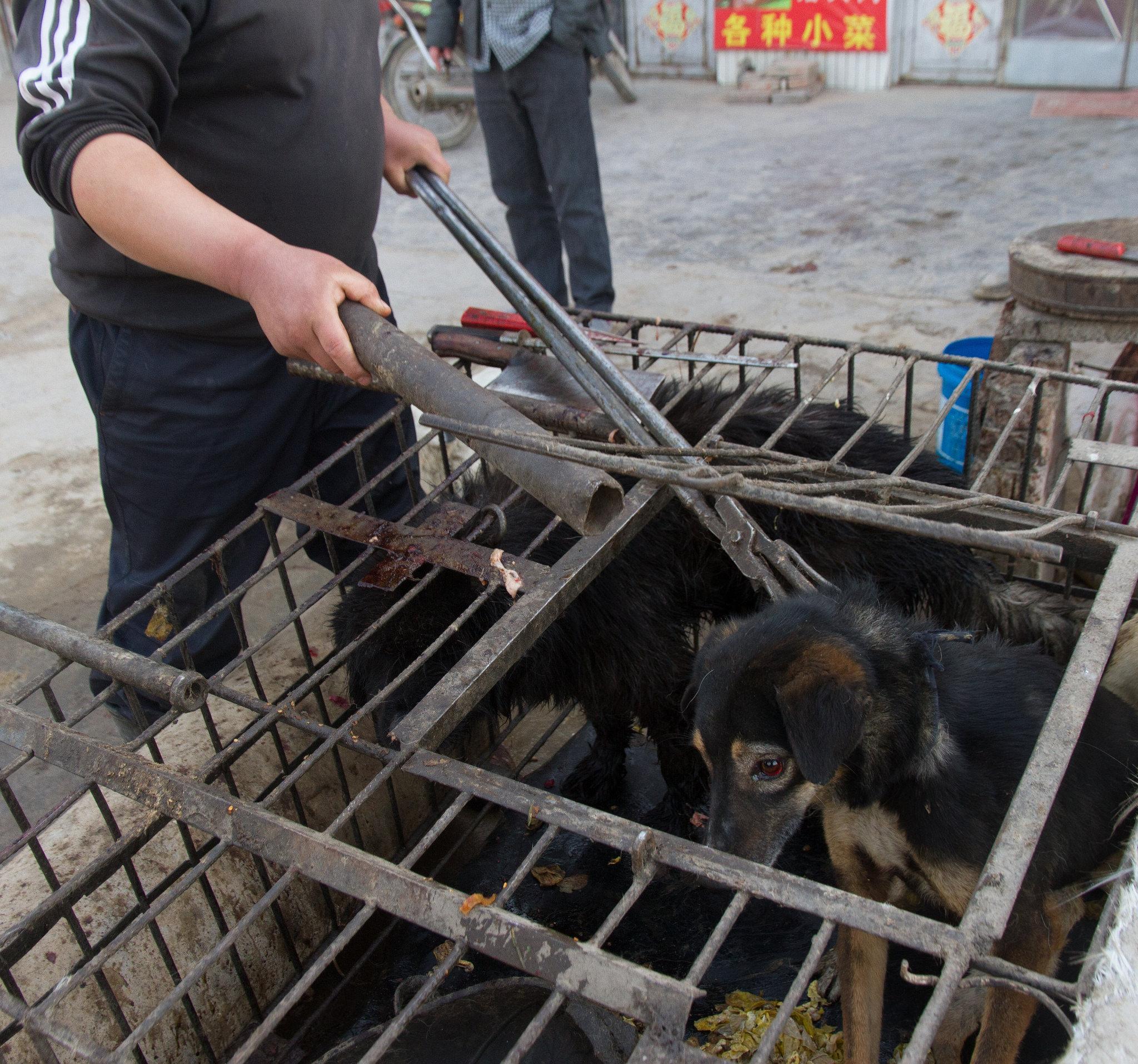Autoridades de Shenzhen en China prohíben el consumo de carne de gato y perro