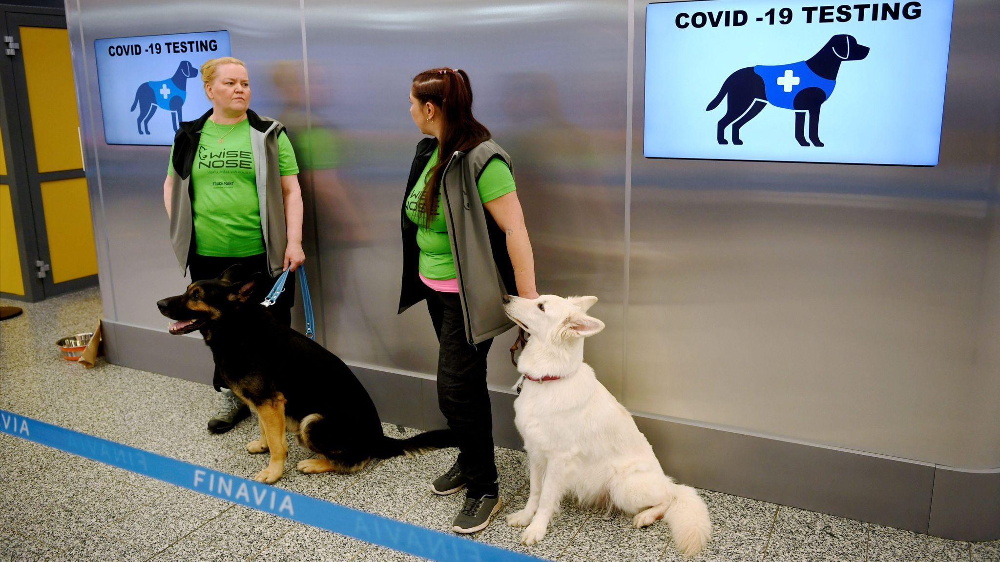 Coronavirus: Finlandia detecta casos con perros entrenados y casi 100% de efectividad; Bogotá inicia programa de detección, aislamiento y reporte
