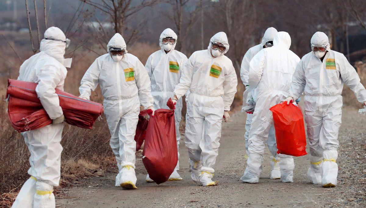 "Corea del Sur sacrifica 18,8 millones de aves luego de un brote ""altamente contagioso"" de gripe aviar"