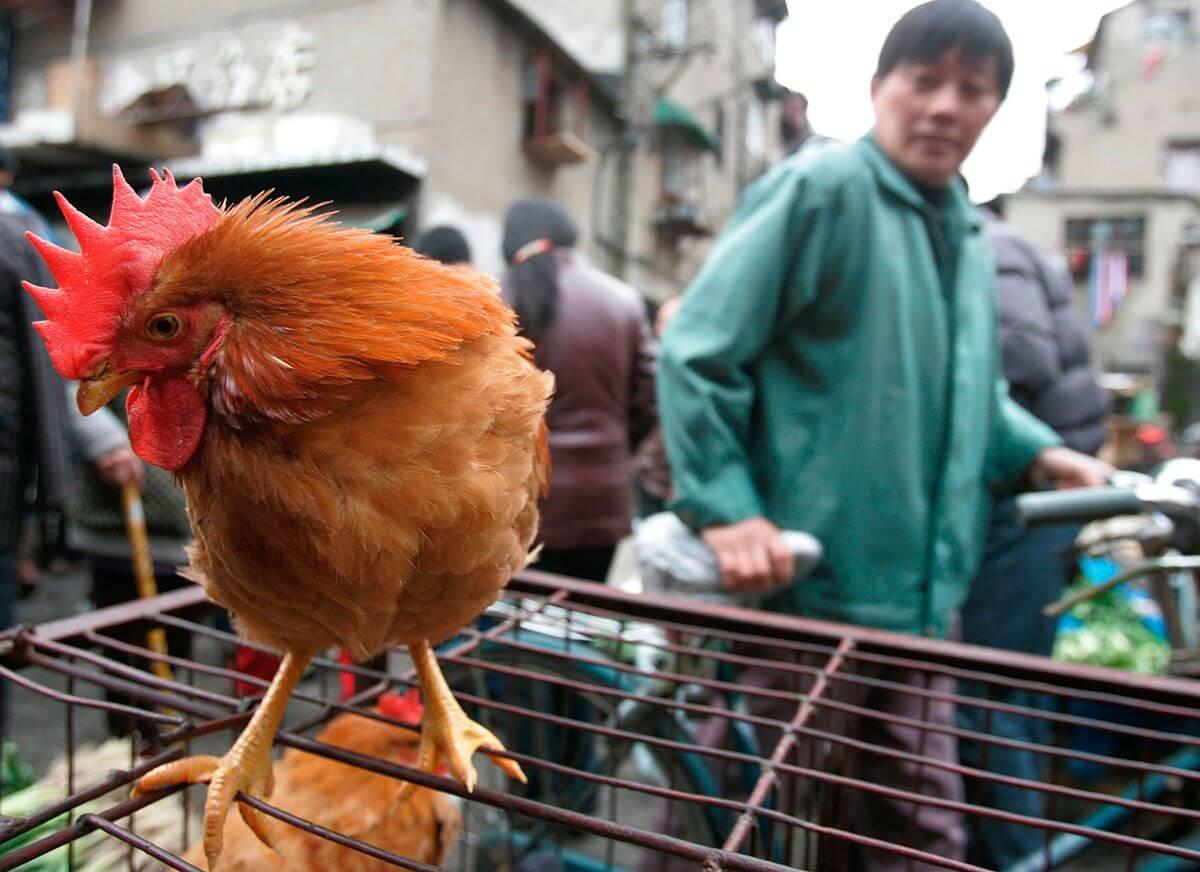 Detectado por primera vez en humanos el virus H10N3 de gripe aviar