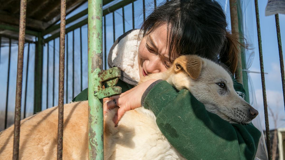 Corea del Sur: El presidente Moon Jae-in evalúa prohibir el consumo de carne de perro