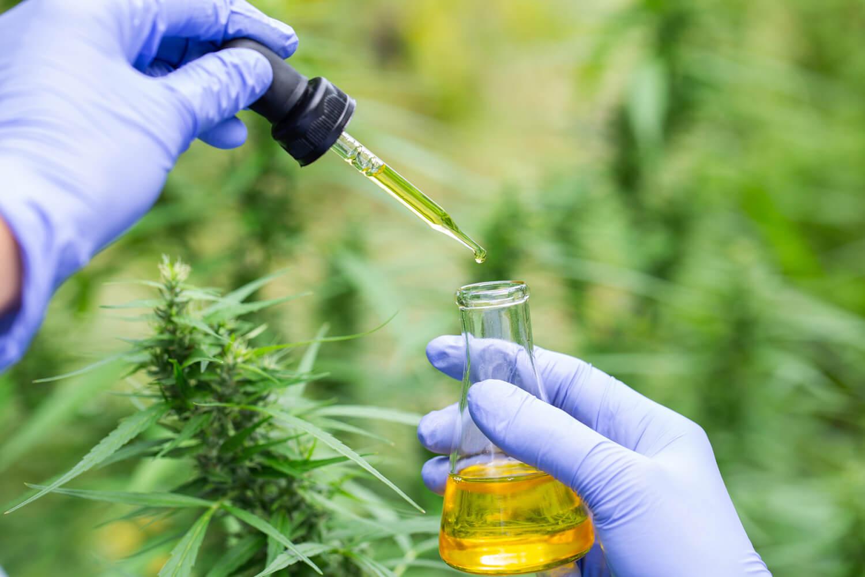 """""""La madre de todos los cannabinoides"""", el CBGA, es más eficaz para las convulsiones que el CBD, según un nuevo estudio"""